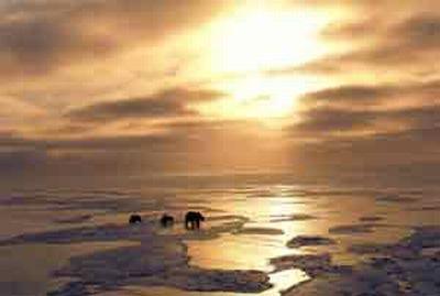 Predicen que los glaciares del Ártico desaparecerán en 2013